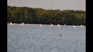 Travel View Wetland Birds Al Zorah Nature Reserve   Ajman