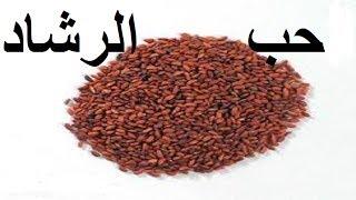 محمد الفايد - حب الرشاد Mohamed Elfaid - Cresson