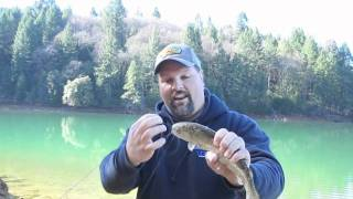 Trout Fishing With Fire Bait.m4v view on youtube.com tube online.