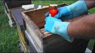 Ameisensäurebehandlung mit der Grabkerze