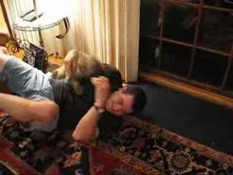 Fergus The Cairn Terrier Attacks!