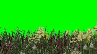getlinkyoutube.com-grasses in the wind -  green screen effects