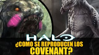getlinkyoutube.com-Halo - ¿Cómo se reproducen los Covenant? (Curiosidades de Halo, Ep. 5)