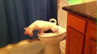 getlinkyoutube.com-Dog Pees in the Toilet