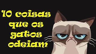 getlinkyoutube.com-10 coisas que os gatos odeiam #53