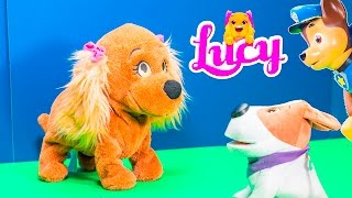getlinkyoutube.com-LUCY PUPPY Club Pets Lucy Obedient Puppy Fun at Dog Park + Cacamax + Wiggles Puppy Lucy Video Toy Re