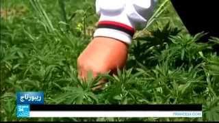 getlinkyoutube.com-في عمق الحدث   نقاش حول تشريع زراعة نبتة الحشيش في لبنان