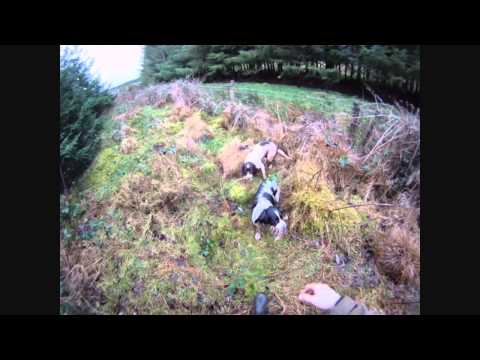 Woodcock Shooting Co Antrim 2013