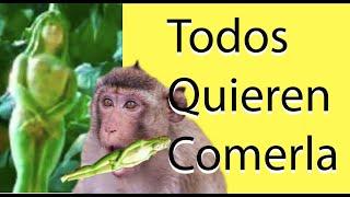 getlinkyoutube.com-NARILATHA La Planta   Con Forma De Mujer