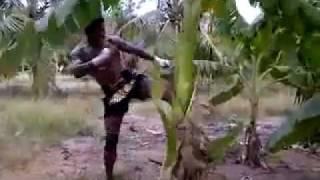 getlinkyoutube.com-บัวขาว Vs ต้นกล้วย  (BuaKaw Kick a tree)