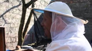 getlinkyoutube.com-Pan Rybka i pszczoły