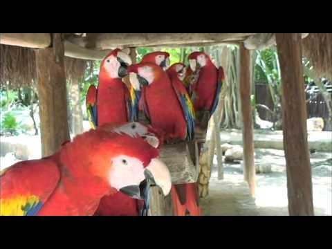 Xcaret Cancun & Riviera Maya - Programa de preservación de Guacamayas - Parte 2