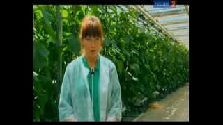 getlinkyoutube.com-Агрогорода: гидропоника и аэропоника круглый год