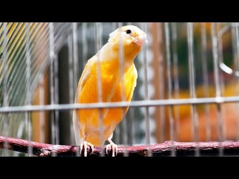 How to Pick a Pet Bird | Pet Bird