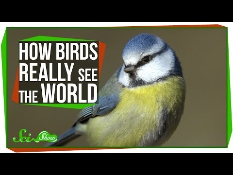 How Birds Really See the World