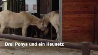 07.01.2017 - Drei Ponys und ein Heunetz