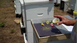 getlinkyoutube.com-Facts about Fresh Bee Pollen