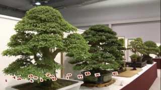 getlinkyoutube.com-2012 Taiwan Bonsai Exhibit(1), 第17回華風盆栽精品展,逸品獎.華風獎.特別獎Full HD 1080p
