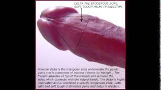 getlinkyoutube.com-Human penis part 8 FRENULUM OF PENIS 18+ Educational purposes.(jklakhani)