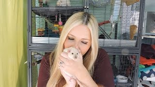 Where to Buy Pet Rats