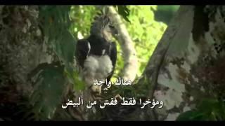 النسور آكلة القردة 1