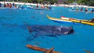 getlinkyoutube.com-宿霧,鯨鯊,眼鏡猴  Tarsier.Whale shark.Cebu.