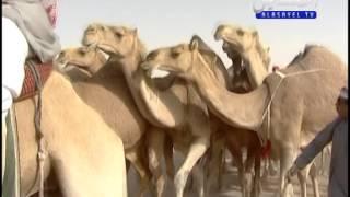 منقيه الشيخ حسن بن حزمي الدوسري بمناسبة مشاركة بمزاين الكويت