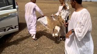 getlinkyoutube.com-الرشايدة في السودان