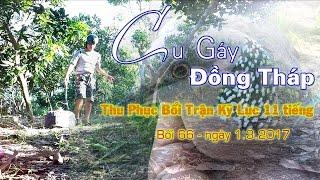 Cu Gáy Đồng Tháp  Bổi Trận Kỹ Lục 66 Ngày  1 3 2017