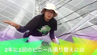 getlinkyoutube.com-【マンゴー】ビニールハウス張替え時の救世主!!??