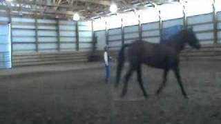 getlinkyoutube.com-Tip for the Ride - Lunging Positioning.wmv