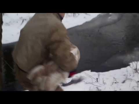 azyl mironice-uwolnienie łabędzia
