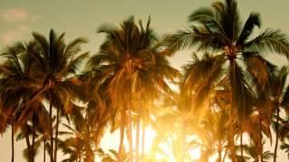 getlinkyoutube.com-Avicii - The Nights (Mau Kilauea's Tropical Remix)