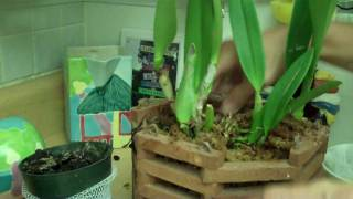getlinkyoutube.com-How to plant an Orchid.