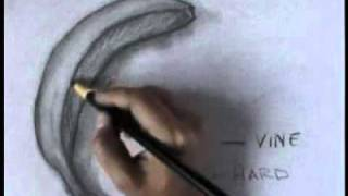 getlinkyoutube.com-Charcoal Drawings - Learn to draw with charcoal