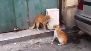 getlinkyoutube.com-The Best Cat Fights - Brutal and Funny Cat Fights 2015 - Best Cat Videos