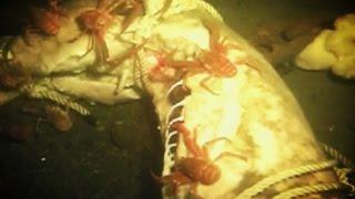 getlinkyoutube.com-What Happens To DEAD BODIES in the Ocean?