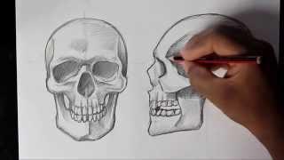 getlinkyoutube.com-How to Draw Human Skull Front/Profile | Human Anatomy