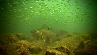 Go With the Flow - River Fishing Smallies and Walleyes