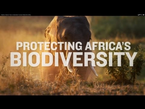 Toward a Greener Future: Conservation Success Stories from Africa