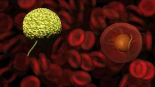 Malaria - Part 2 The Mosquito Host
