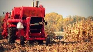 getlinkyoutube.com-Kukurydza bez przystawki Massey Ferguson 86 ☆ 100 film ㋡ MafiaSolec