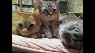 getlinkyoutube.com-NHK Eテレ0655『おれ、ねこ』WAGAMAMA四兄弟スペシャルバージョン♪