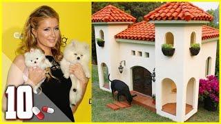 getlinkyoutube.com-10 Cucce e Case per Cani più Costose al Mondo