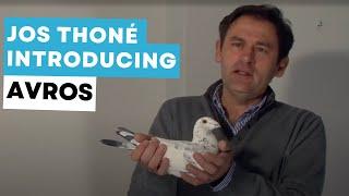PIPA - Jos Thoné Auction - Avros
