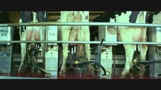 getlinkyoutube.com-Industrija mesa - Posle ovog videa nece vam biti sve jedno kad jedete meso
