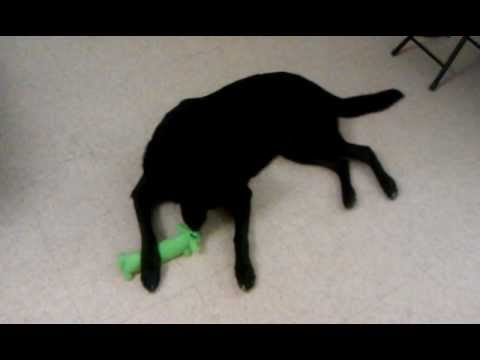 Batman and Dog Toys