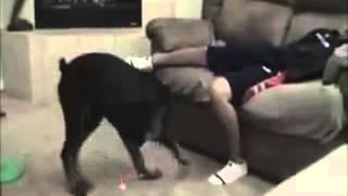 dog cut the xxx