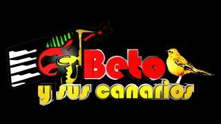 getlinkyoutube.com-Beto Y Sus Canarios - Mix de Exitos