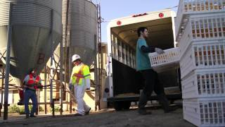 getlinkyoutube.com-Largest California Farm Animal Rescue - Inside A&L Egg Farm